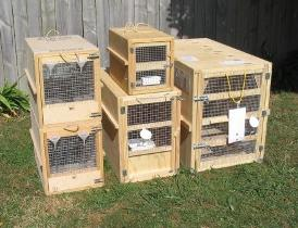 plywood animal travel cages