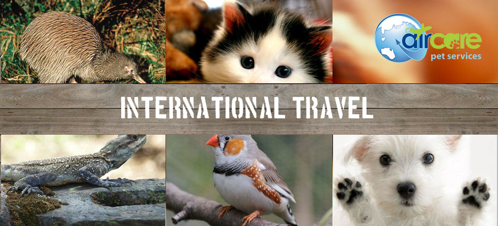 International Travel for all animals